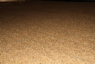 grains d'orge   by delicesdinities