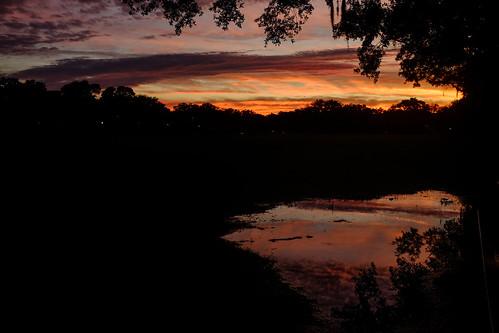 savannah daffinpark