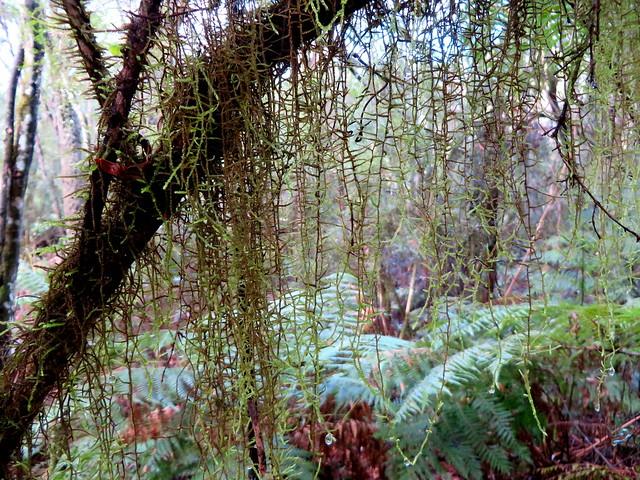 Bemn River Rainforest