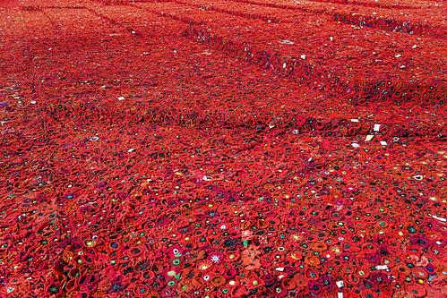 australia federationsquare melbourne poppies canon24105l canoneos6d