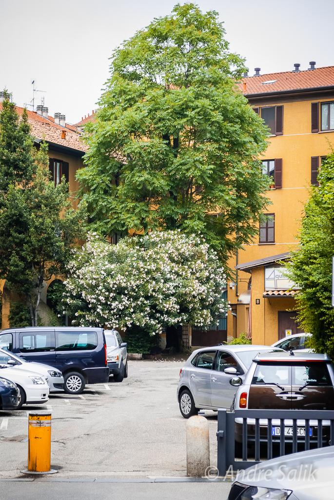 Milan, Lombardy, Italy  11:56:58 DSC_2180