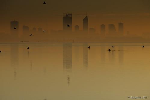 sunrise reflections landscape australia westernaustralia swanriver birdlife perthskyline canon5dmkii melvillewaters northernwanderer patricklow