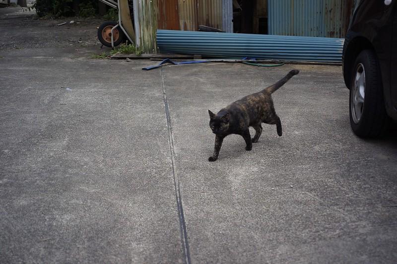 Rust cat