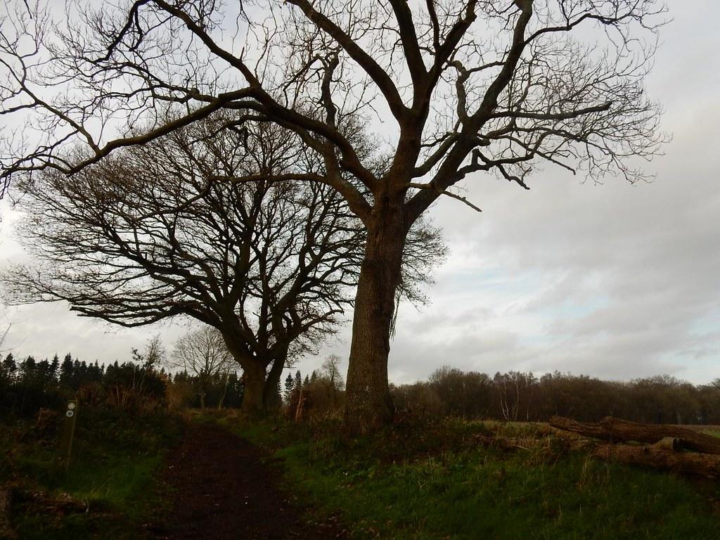 Trees Shiplake to Henley