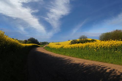 road trees sky clouds landscape shadows træer himmel marker fields skyer vej rapeseed landskab rasp skygger