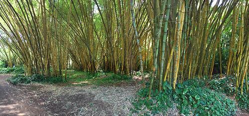 McBryde - Allerton Gardens -Joe 25 | by KathyCat102