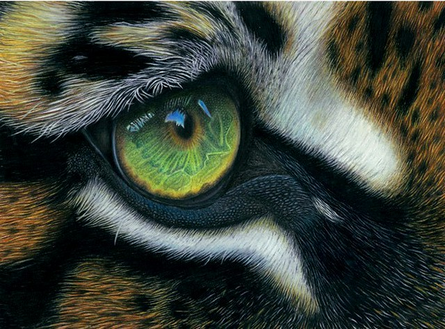 Heart of Tiger - For Sale