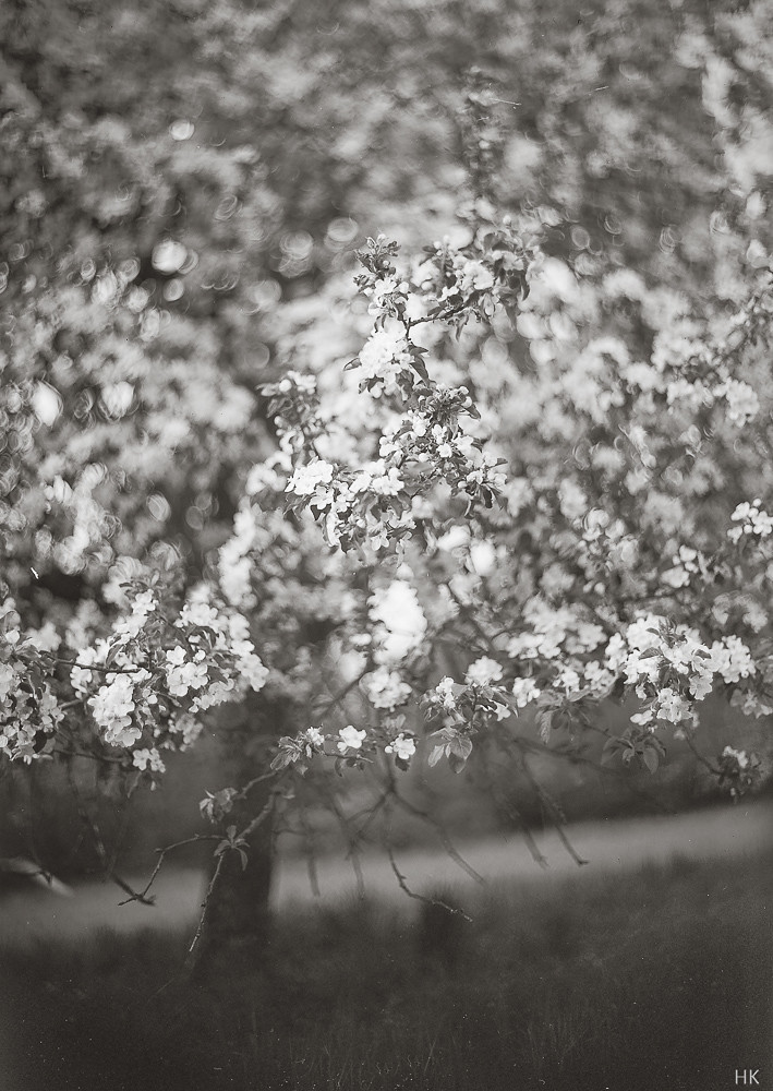 Blossom Cloud
