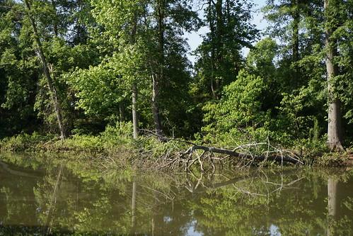 sony ponds perrygeorgia camminante rozarpark a6000 kg4vln reflectingoffwater