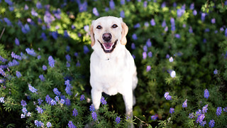 Flowers with Tillie | by Brian.Buckler