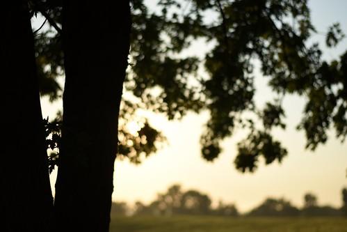 morning mist leaves sunshine silhouette misty fog sunrise nikon warm dof bokeh pennsylvania foggy sunny depthoffield pa nikkor warmlight nikonphotography fredericksburgpa nikkorafs50mm118g nikond7200 saltydogphoto
