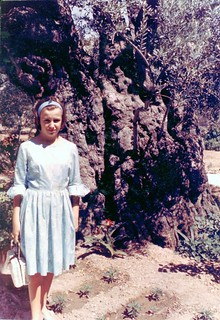 Olive tree in Jerusalem, Jordan