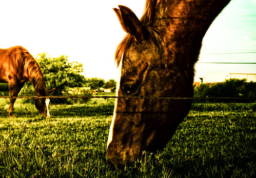 horses horse texas equine sonya6000 sonyfe55mm18