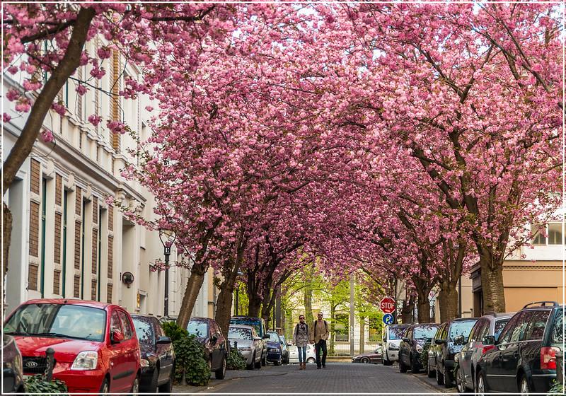Mùa xuân ở Châu Âu