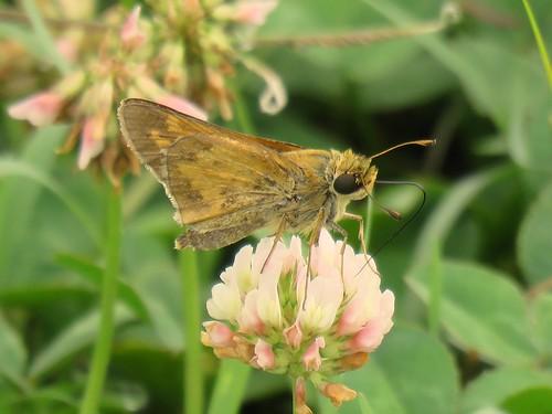 sachem clarksvilletn tnbutterflies canonpowershotx60