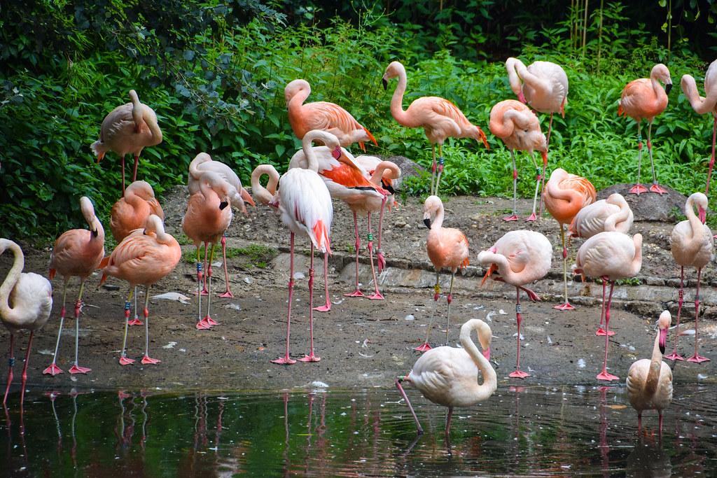Flamingo Deutschland