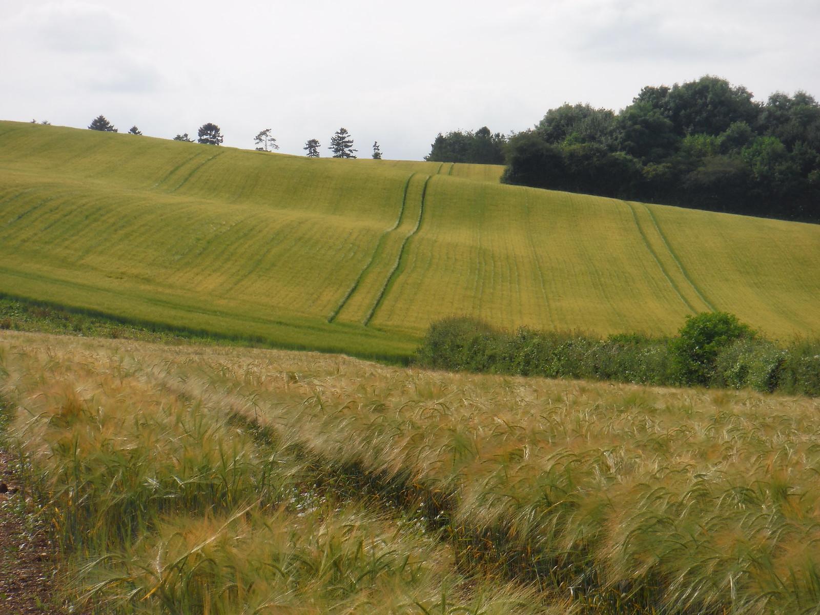 Fieldscape near Lower Eldon Cottage SWC Walk 265 - Dean to Mottisfont and Dunbridge