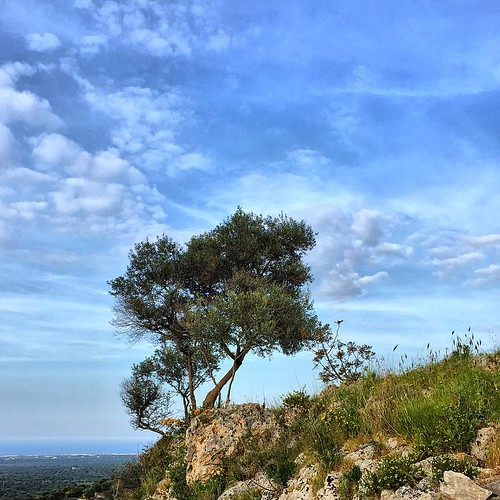 La #grotta dei #millenari #ostuni #brindisi #italy #italia #delia #igpuglia #igerspuglia #ig_captures #instagood #instagramer #ulivisecolari #ulivio #instapic | by Maurizio Montanaro™ - 