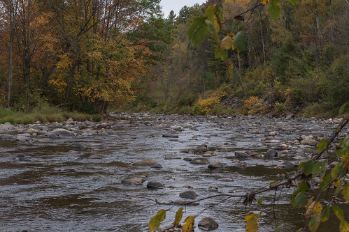 autumn fall river stream vermont newengland foliage brook trout mapletrees stjohnsbury mooseriver