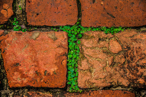 Perfect abstract of nature in bricks
