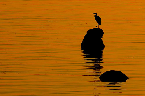 blue sunset orange usa fish bird heron beautiful beauty silhouette rock wow washington bestof thankful blaine foul customs nexuslane dexhorton