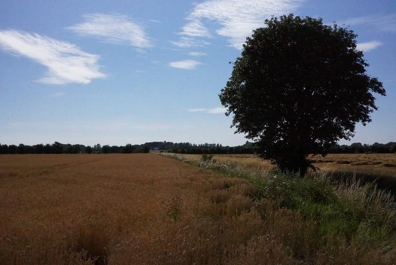Kaedeby-Haver-2014-07-17 (1)