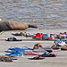 Harbor seal at the end of the Columbia dock (Spuyten Duyvil Creek) by Steve Guttman NYC