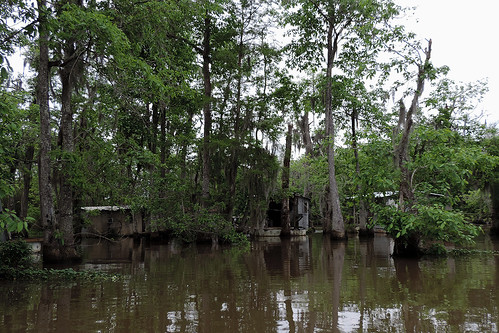 neworleans neworleansla neworleanscitytrip outdoor swamp river boattrip oldpearlriver slidell landscape buildings tree trees plant plants dnysmphotography dnysmsmugmugcom