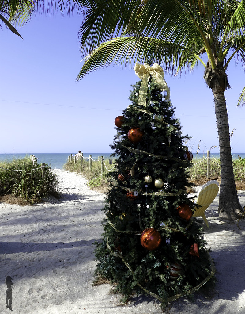 Christmas In Florida Images.Christmas In Florida Carine Poletti Flickr