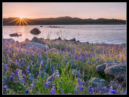 california flower sunrise landscape lumix us unitedstates panasonic hdr m43 granitebay gh4 folsomdam mirrorless microfourthirds m43ftw dreyerpicturescom