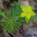 Gradient  Here is once again one of the surprising flowers one can discover on the sides of the Canal du Midi, with petals and leaves making a beautiful color gradient ( ++). #photobystef #fleur #flower #花#はな green #vert #みどり #緑 #jaune #yellow #黄色 #きいろ #c