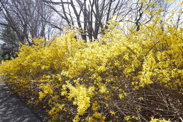 木, 2015-04-16 14:35 - Brooklyn Botanic Garden