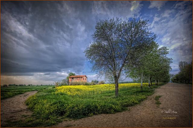 (088/15) Yellow fields