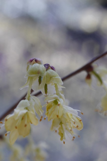 木, 2015-04-16 14:04 - Brooklyn Botanic Garden