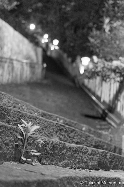 Stone Steps and a weed