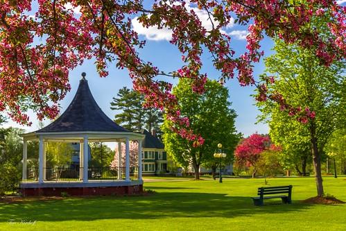 Spring in the Park | by Tim_NEK