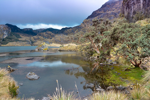 Cajas National Park | by Carine06
