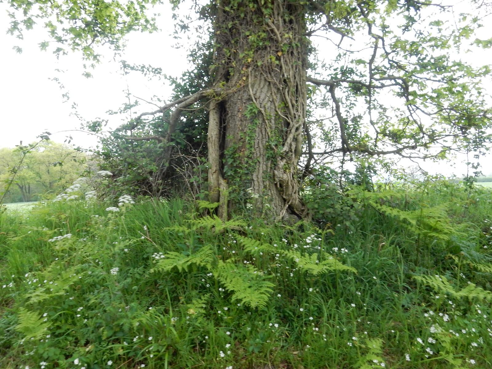 Woodland bouquet Going Circular via Hill Bottom