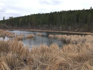 Westlake Road Wetland
