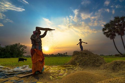 boy sunset people play paddy