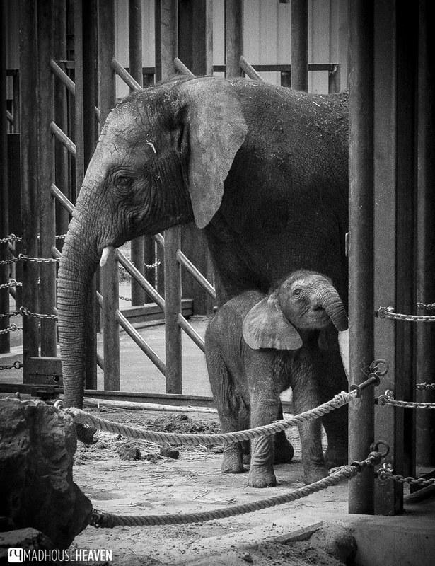 Safaripark Beekse Bergen - 0252