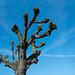 Warnemünde Baum