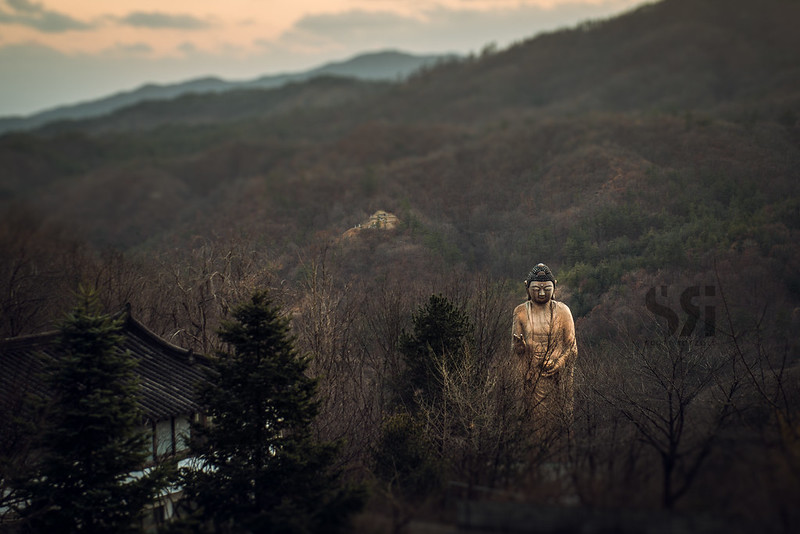 A Towering Valley Guardian