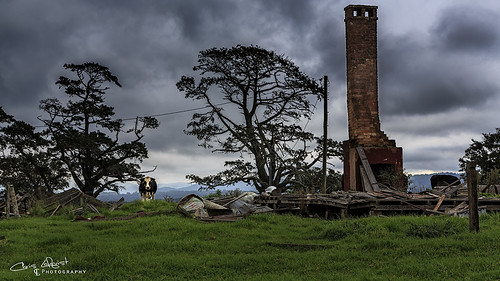 chimney abandoned cow ruin australia oldhouse nsw dorrigo