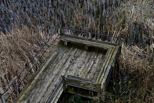 wood holland texture grass sepia mi bench spring nikon midwest michigan may boardwalk tuliptime weathered marsh tulipfestival 2016 ottawacounty marshgrass nikon2485 nikond610 windowonthewaterfrontpark macatawamarsh