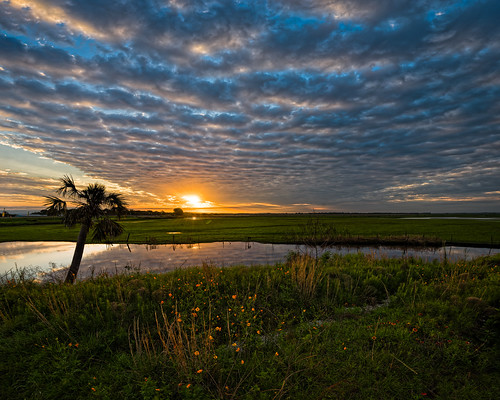 centralflorida cloud cloudy dawn edrosack florida flower grass landscape marsh panorama plant reed reflection river sky stjohnsriver sunrise swamp tree usa water weather christmas edrosackcom