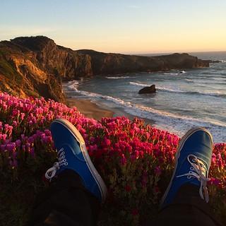 Sea Ranch is in bloom. | by seanflannagan