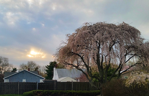 sunset sky clouds fence spring neighborhood willow weepingwillow weeping