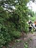 29.05.2016 Einsatz Stephanshausen Erlenweg - Baum auf Straße