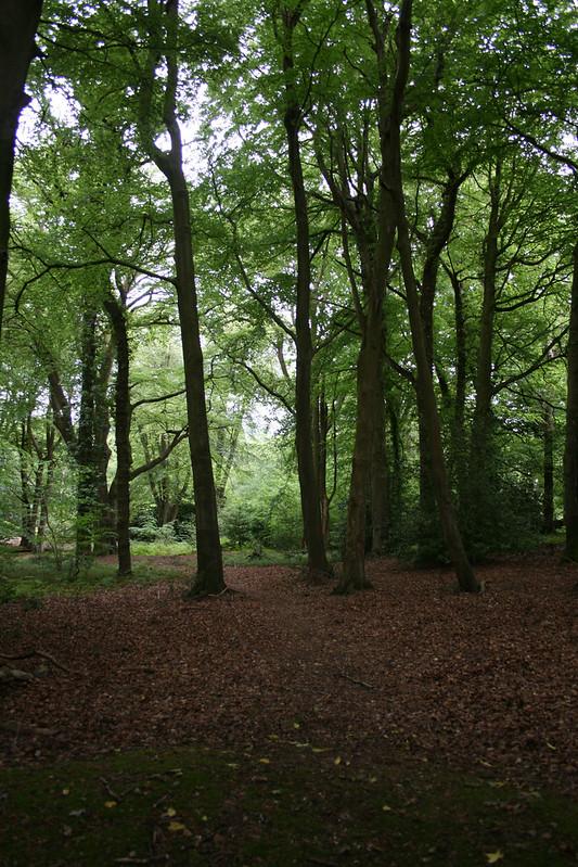 Woodland near Hythe